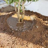 水鉢のつくり方 宿根ガーデン