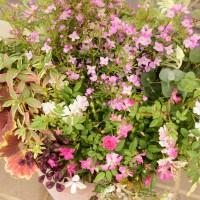 春の寄せ植え 宿根ガーデン