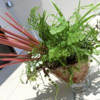 やどねガーデン 寄せ植え 観葉植物