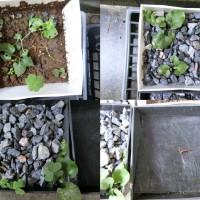 雑草対策比較実験。砂利敷きと防草シートの効果の違いは?
